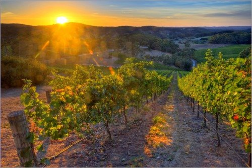 July Morning – Vineyards Edition
