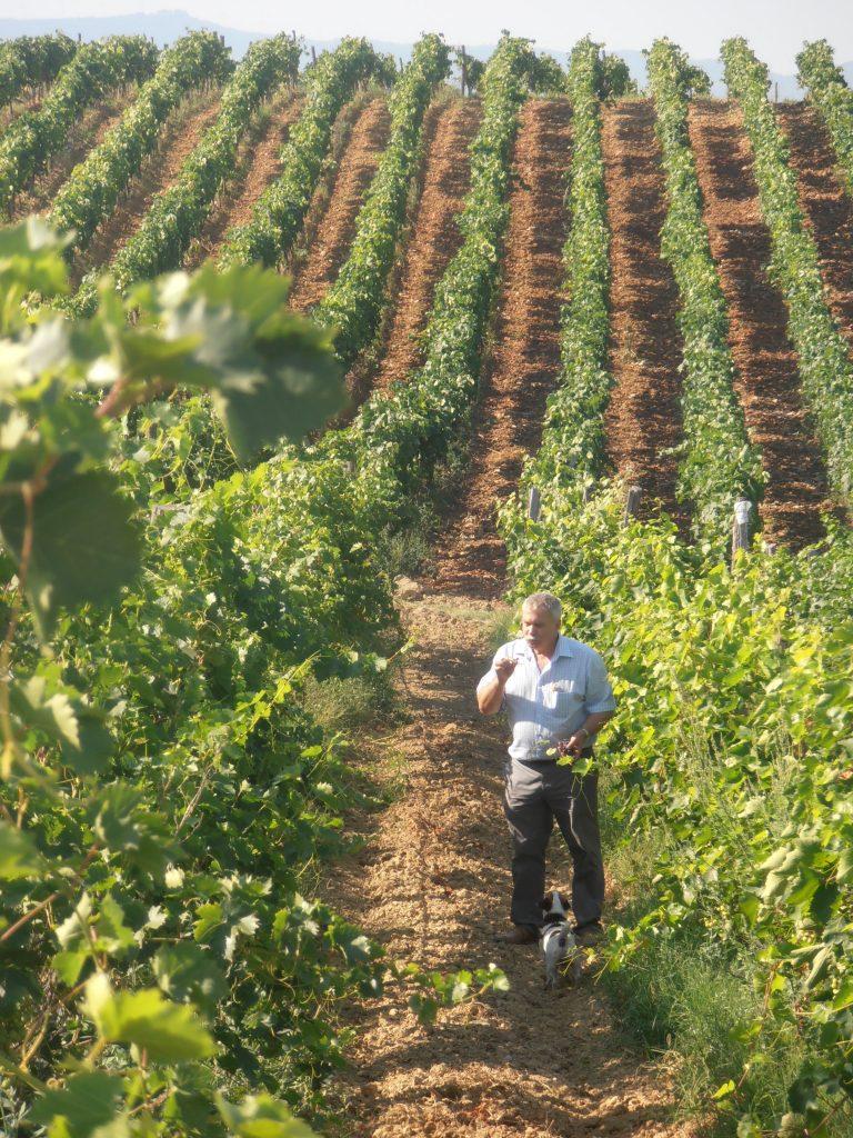 Villa Melnik Zikatanov Harvest