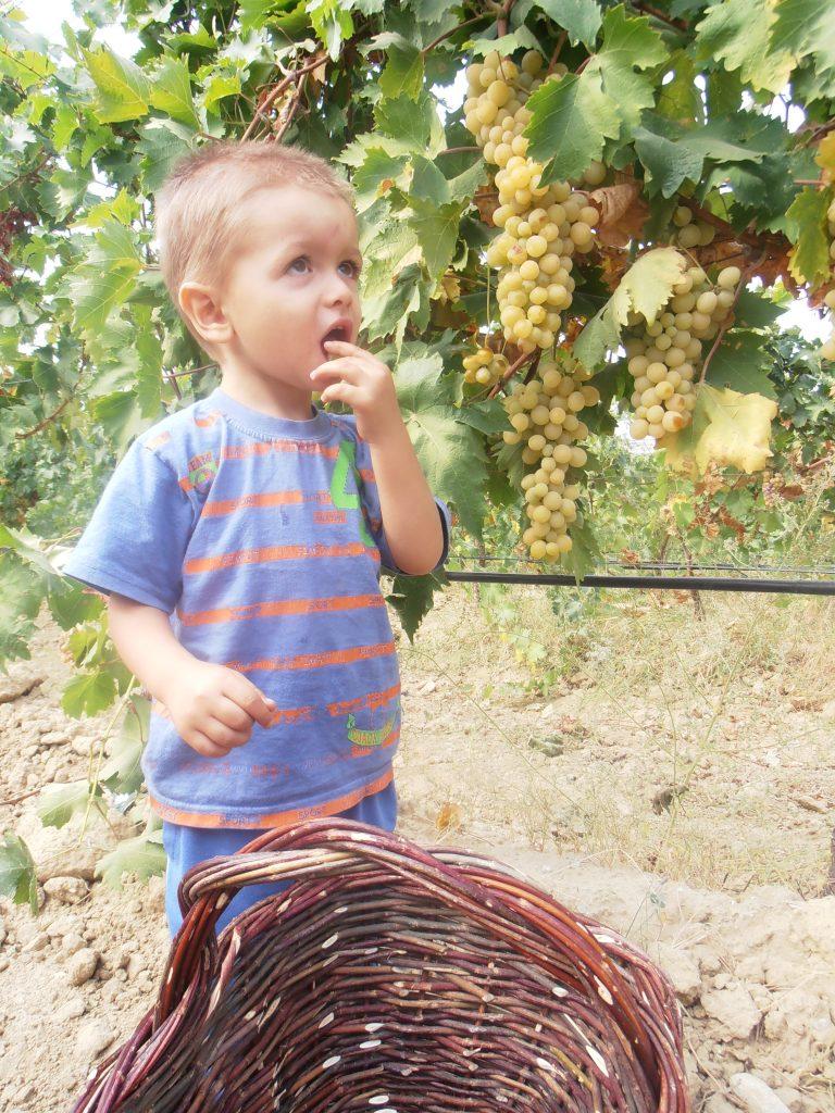 Villa Melnik Family Harvest